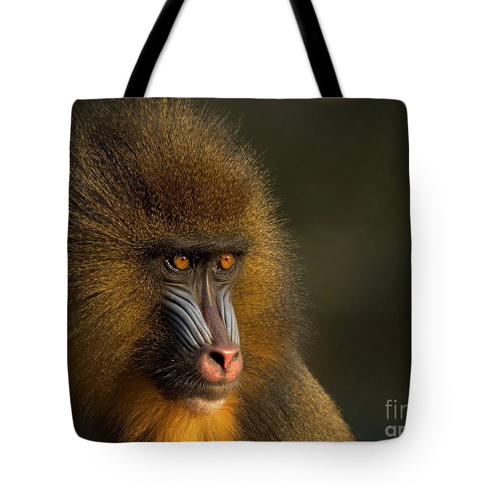Wildlife Tote Bag featuring the photograph Mother's Finest by Jacky Gerritsen