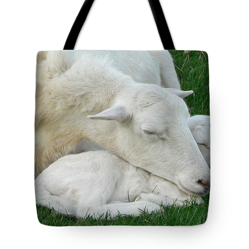 Sheep Tote Bag featuring the photograph Mother's First Love by Melissa Haney
