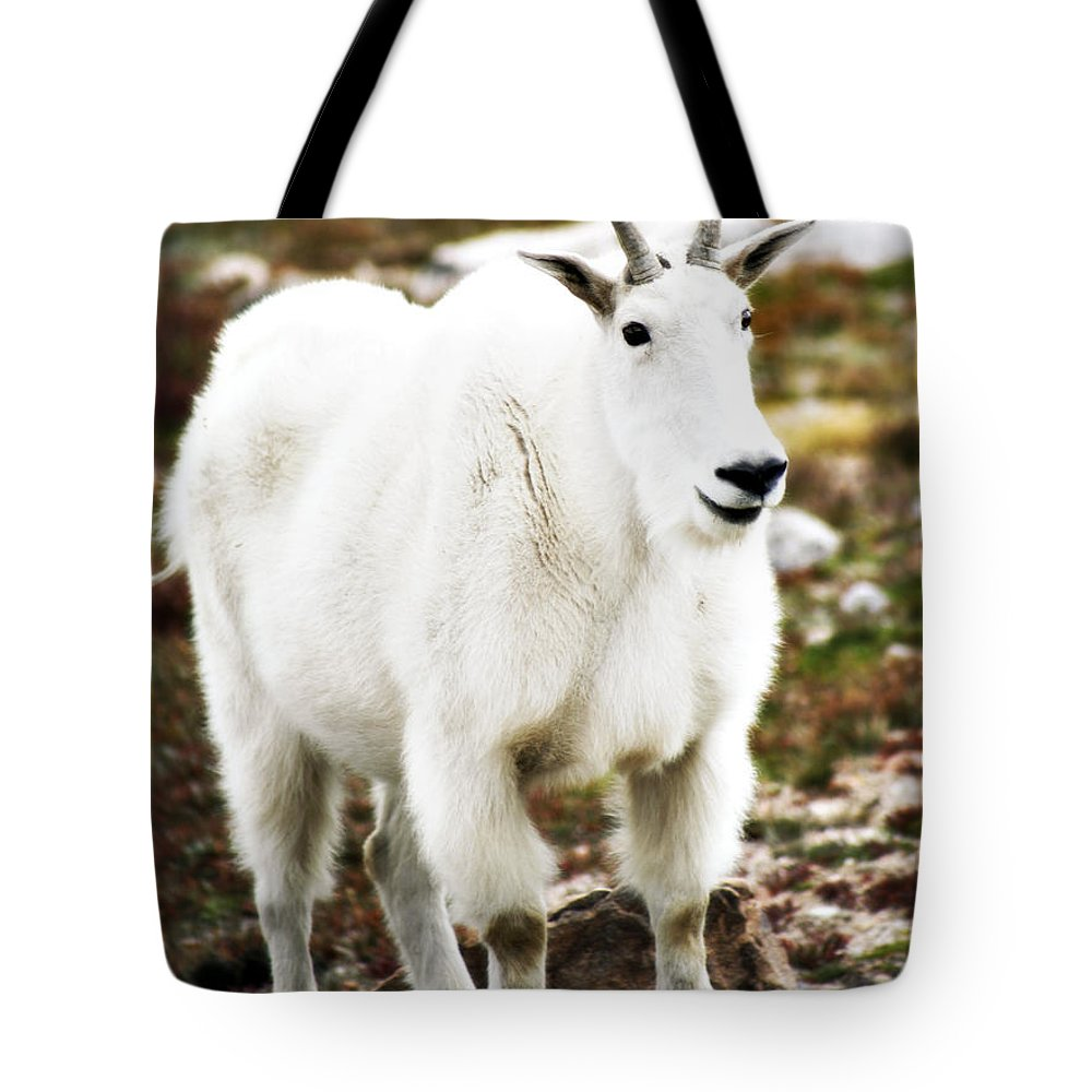 Animal Tote Bag featuring the photograph Mountain Goat by Marilyn Hunt