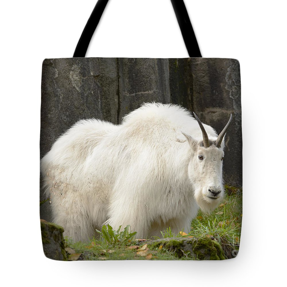 American Tote Bag featuring the photograph Mountain Goat by Marv Vandehey