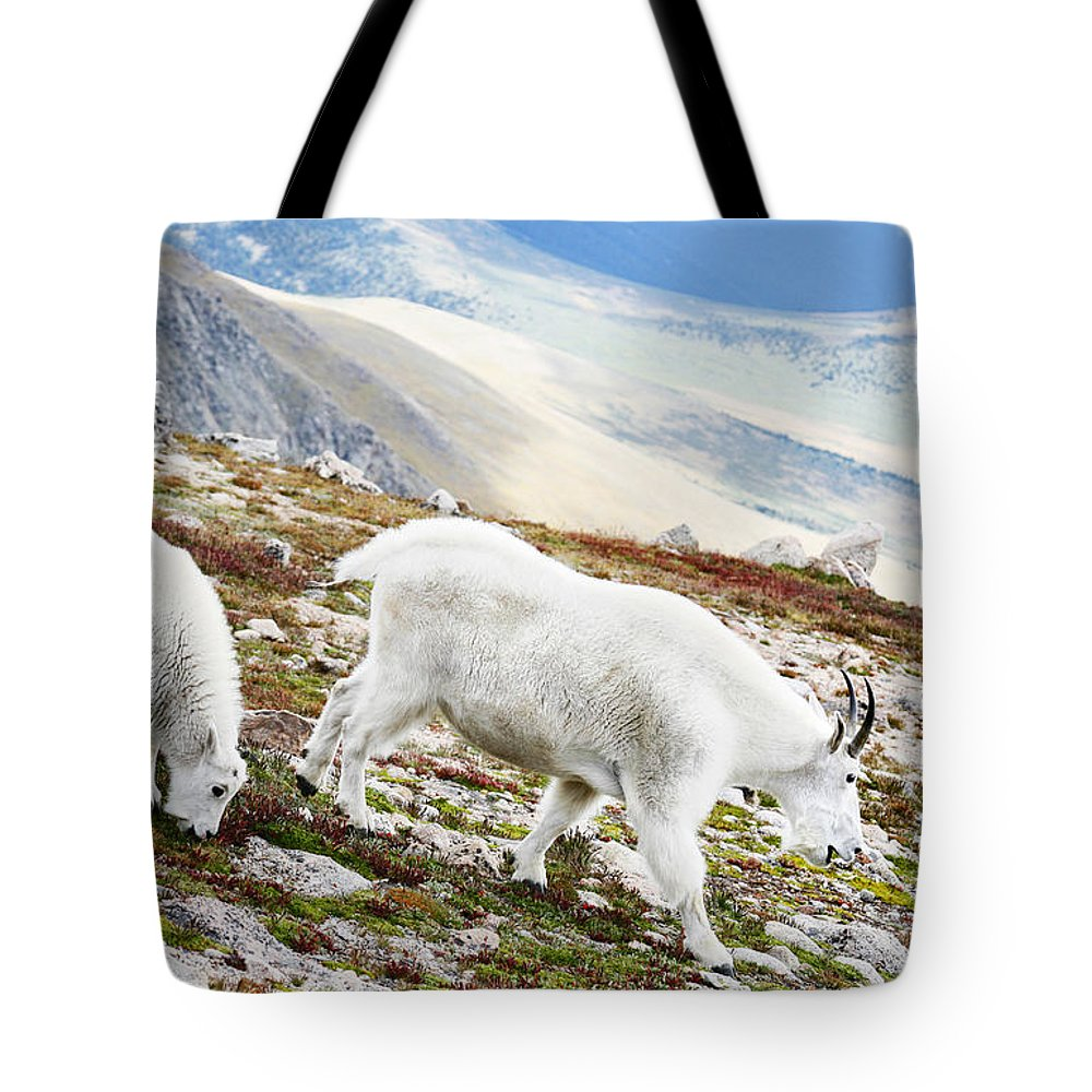 Mountain Tote Bag featuring the photograph Mountain Goats 1 by Marilyn Hunt