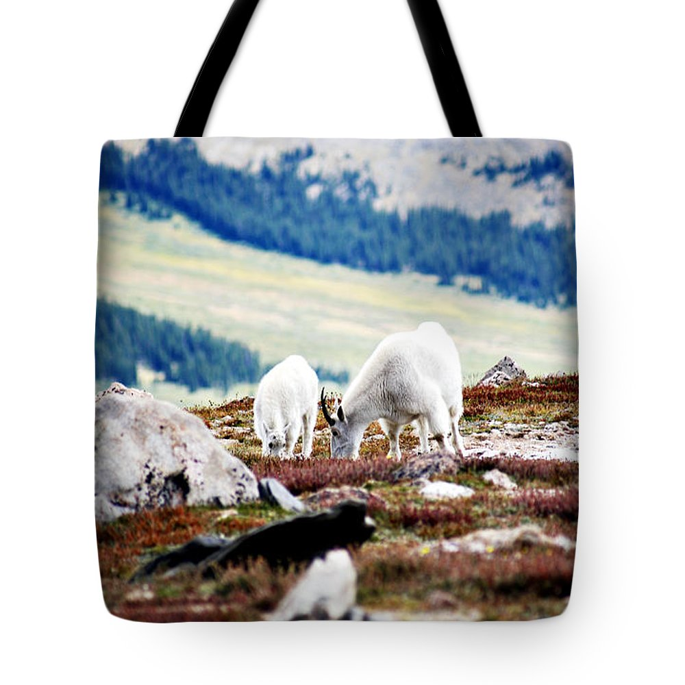 Animal Tote Bag featuring the photograph Mountain Goats 2 by Marilyn Hunt