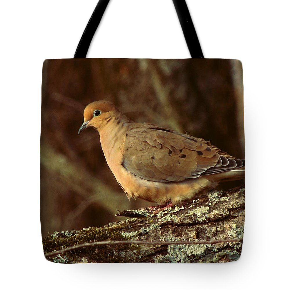 Photo Tote Bag featuring the photograph Mourning Dove At Dusk by Amy Tyler