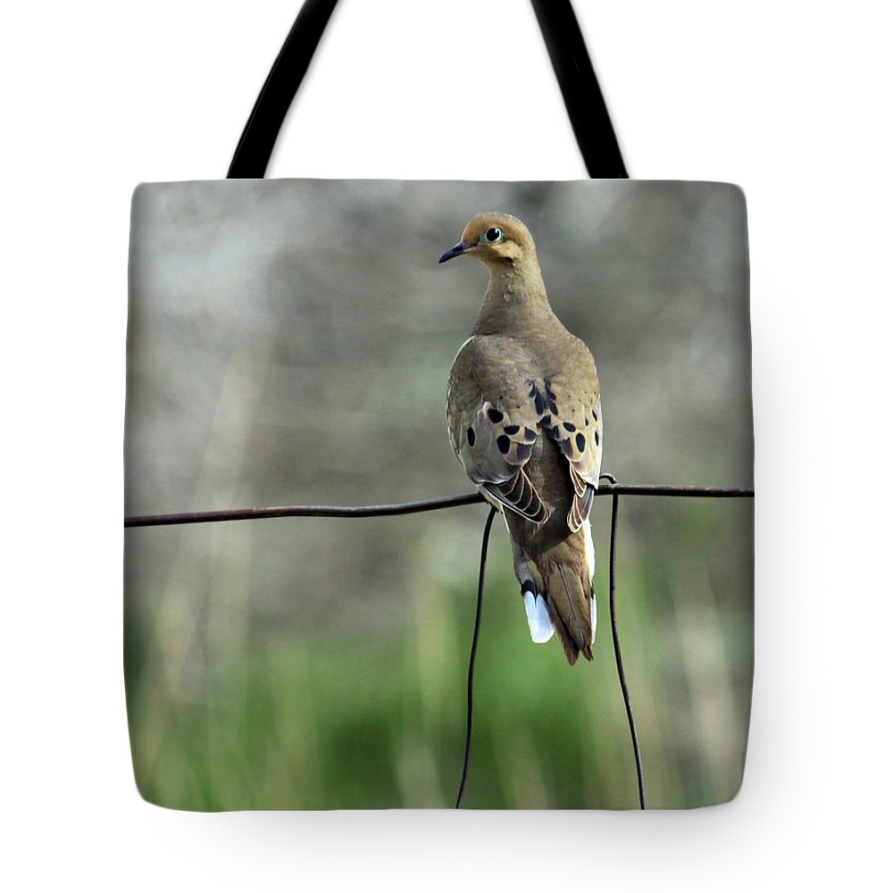 Dove Tote Bag featuring the photograph Mourning Dove by Karon Melillo DeVega