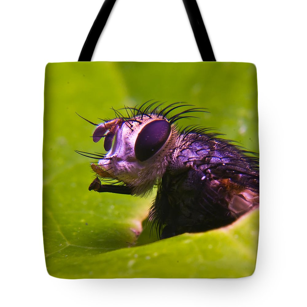 Fly Tote Bag featuring the photograph Mr. Fly by Douglas Barnett