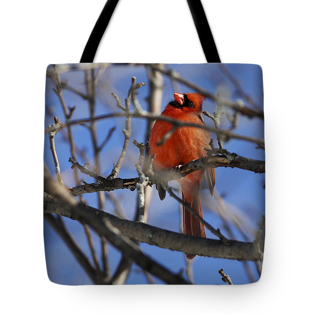 Bird Tote Bag featuring the photograph Mr. Red Beauty by Deborah Benoit