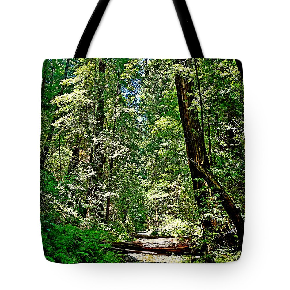 Muir Tote Bag featuring the photograph Muir Woods Study 22 by Robert Meyers-Lussier