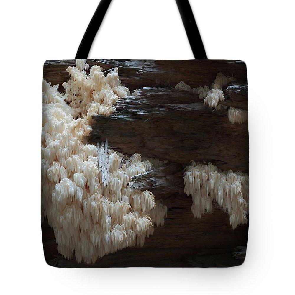Mushroom Tote Bag featuring the photograph Mushroom On Idaho Log by Grant Groberg
