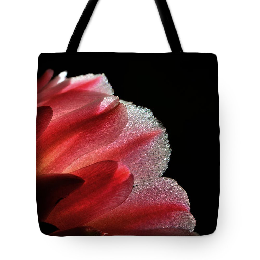 Cactus Flower Tote Bag featuring the photograph My Little Cactus Flower by Donna Blackhall