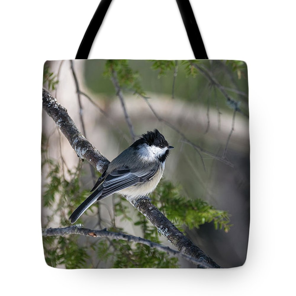 Birds Tote Bag featuring the photograph My Little Chickadee II by Ron Dubreuil