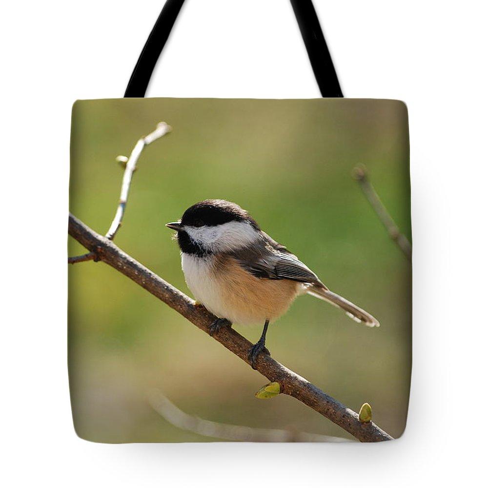 Chickadee Tote Bag featuring the photograph My Little Chickadee by Lori Tambakis