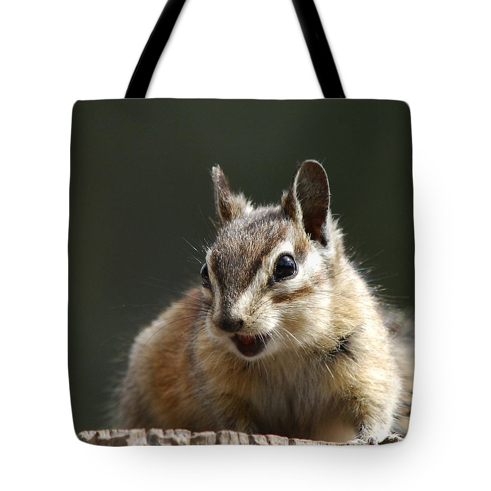 Squirrel Tote Bag featuring the photograph My Name Is Alvin by Donna Blackhall