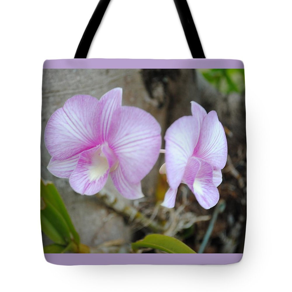 Photo Of Flowers - Beautiful Photo Of A Light Purple Bright Colored Orchid Grown In Fiona's Tropical Garden On A Flamboyant Tree In Sosua Tote Bag featuring the photograph My Orchid # 15 by Fiona Dinali