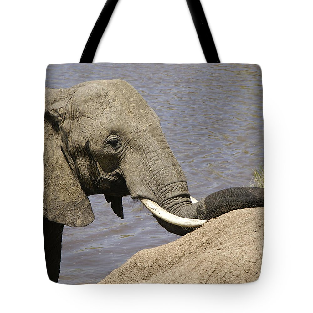 Africa Tote Bag featuring the photograph My Trunk Needs Drying Out by Michele Burgess