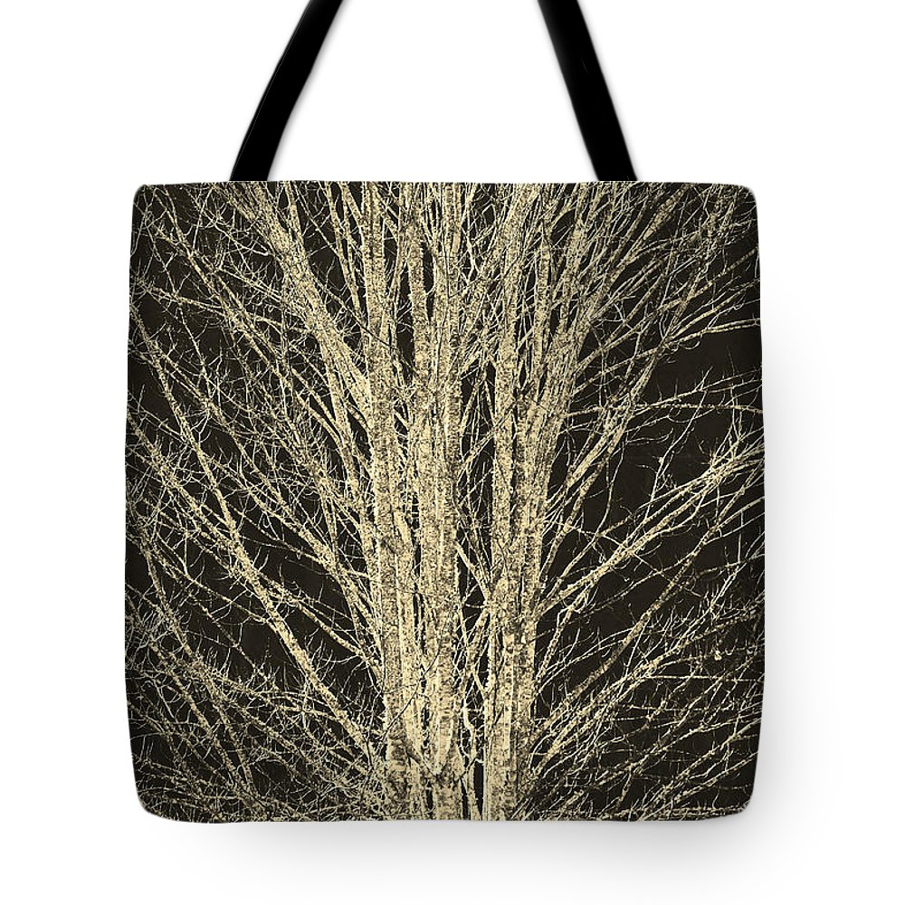 Trees Tote Bag featuring the photograph Naked by Itai Minovitz