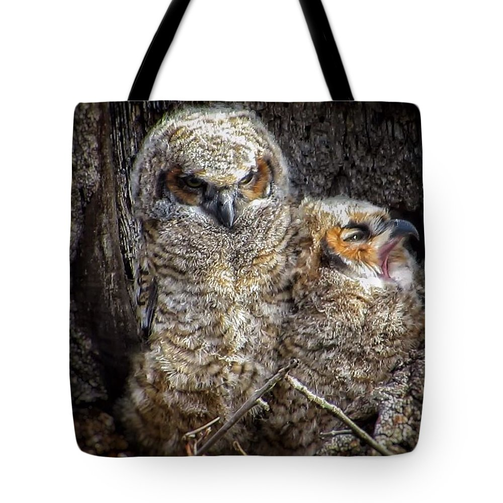 Great Horned Owl Tote Bag featuring the photograph Nap time by Rrrose Pix