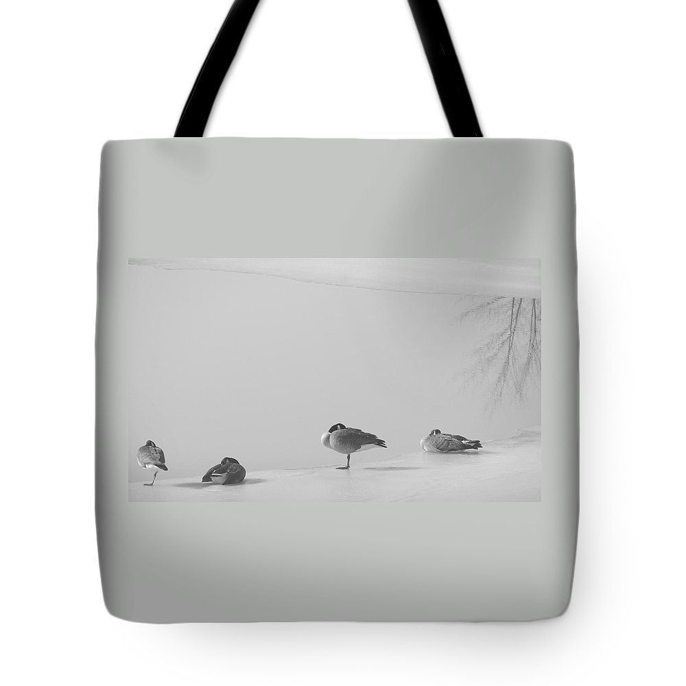 Tote Bag featuring the photograph Napping On Ice by Luciana Seymour