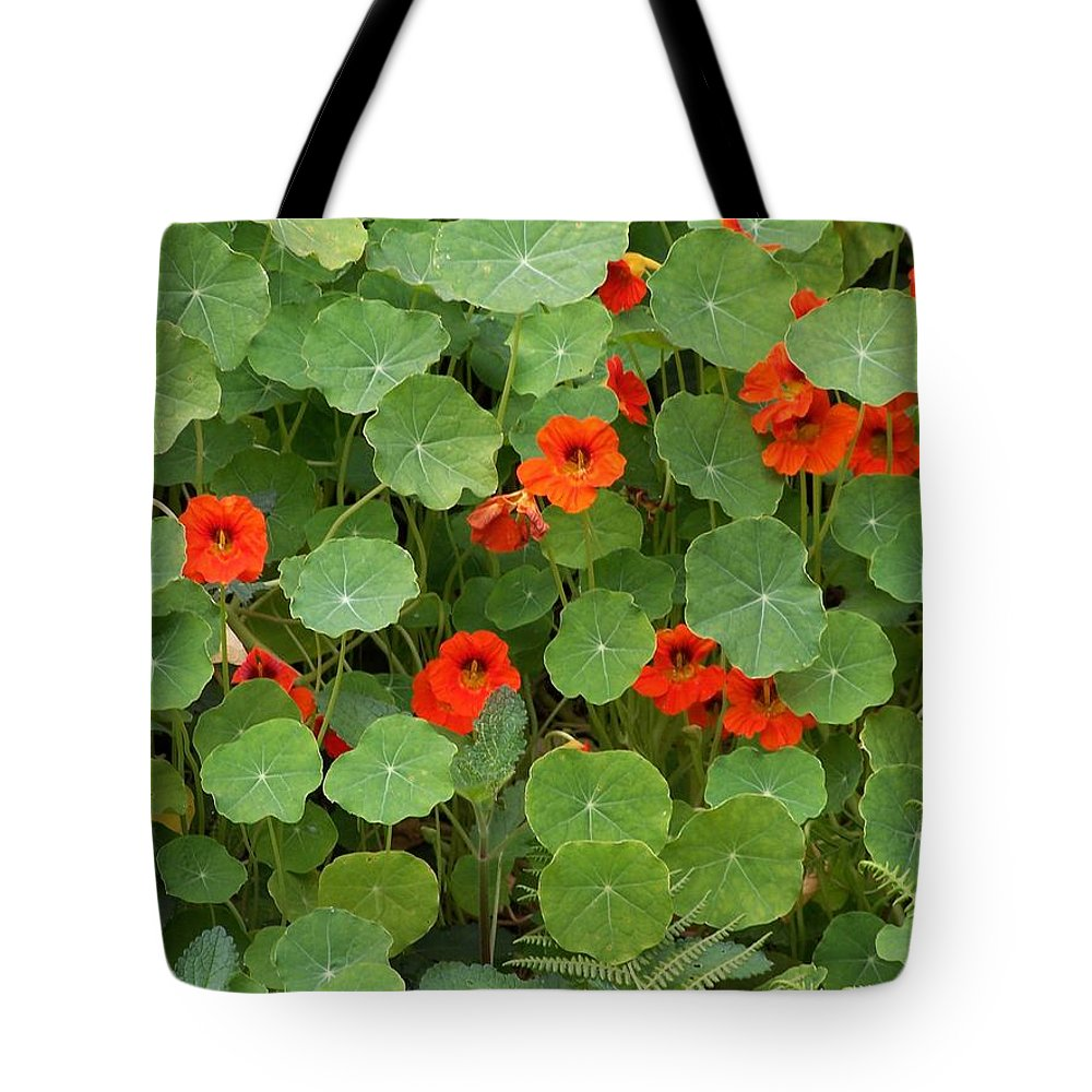 Nasturtiums Tote Bag featuring the photograph Nasturtiums by Gale Cochran-Smith