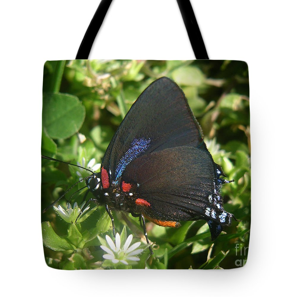 Nature Tote Bag featuring the photograph Nature In The Wild - Black Beauty by Lucyna A M Green
