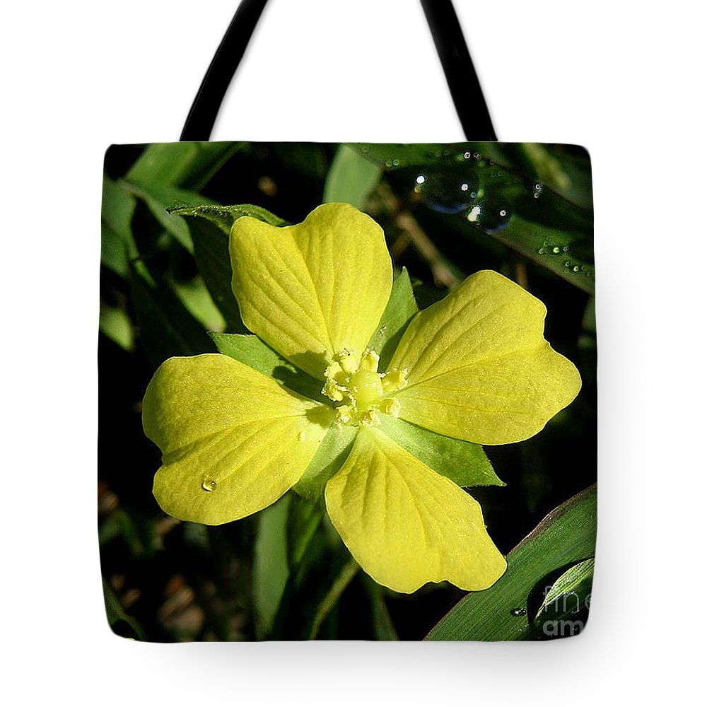 Nature Tote Bag featuring the photograph Nature In The Wild - Kissed By The Sun by Lucyna A M Green