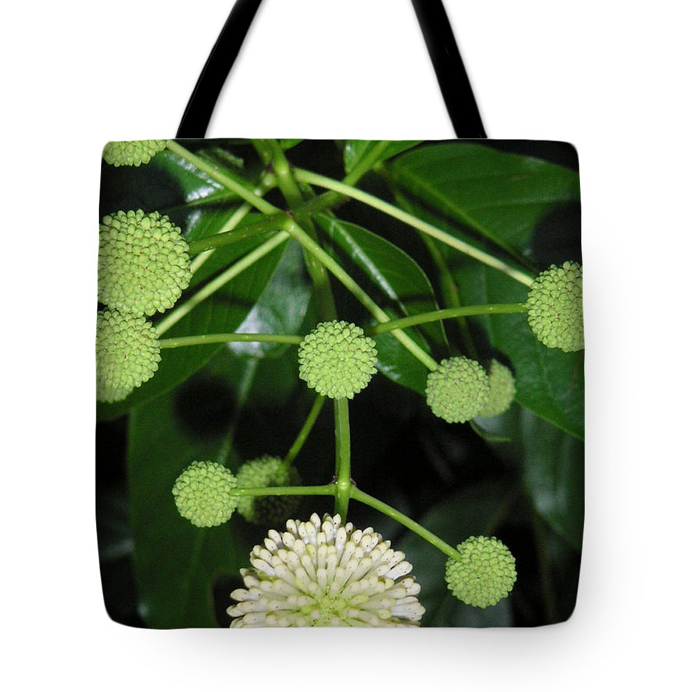 Nature Tote Bag featuring the photograph Nature In The Wild - Natural Pom Poms by Lucyna A M Green