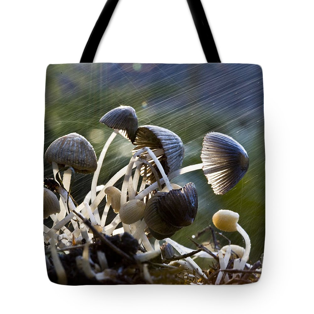 Mushrooms Rain Showers Umbrellas Nature Fungi Tote Bag featuring the photograph Nature by Avalon Fine Art Photography