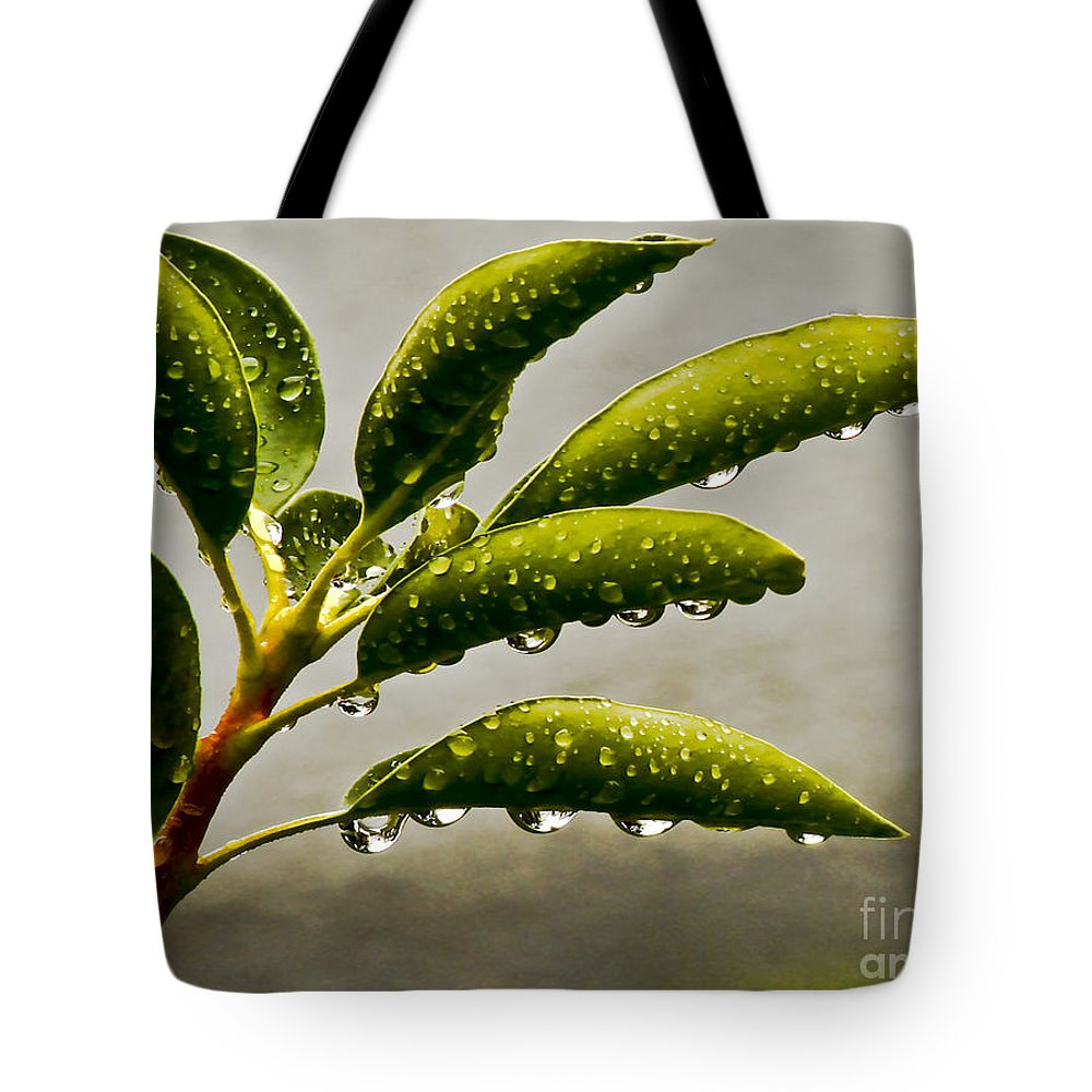 Wet Tote Bag featuring the photograph Early Morning Raindrops by Carol F Austin