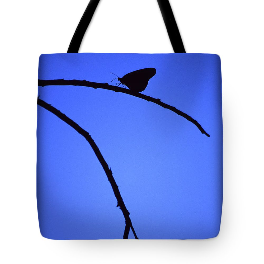 Nature Tote Bag featuring the photograph Natures Elegance by Randy Oberg