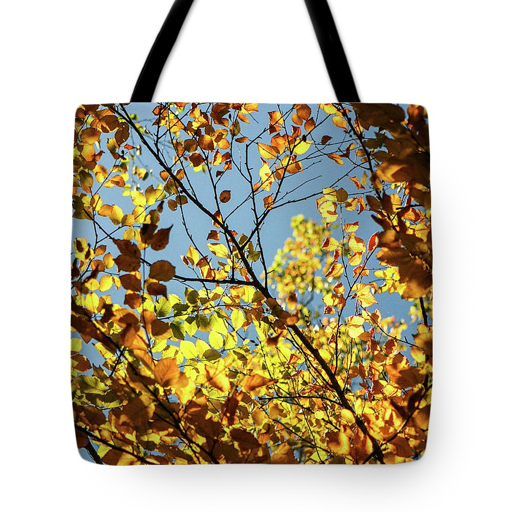 Autumn Tote Bag featuring the photograph Natures Gold by Martina Schneeberg-Chrisien