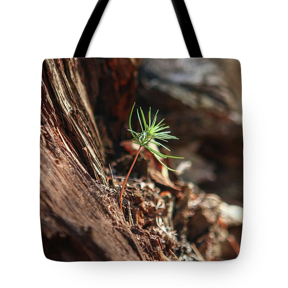 Sapling Tote Bag featuring the photograph Natures Renewal by Martina Schneeberg-Chrisien
