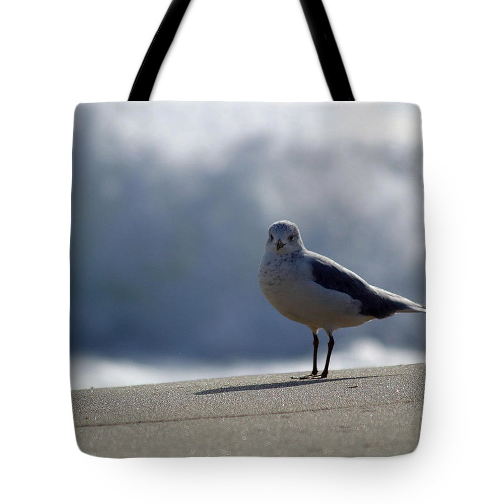 Seagull Tote Bag featuring the photograph Near The Surf by Mary Haber