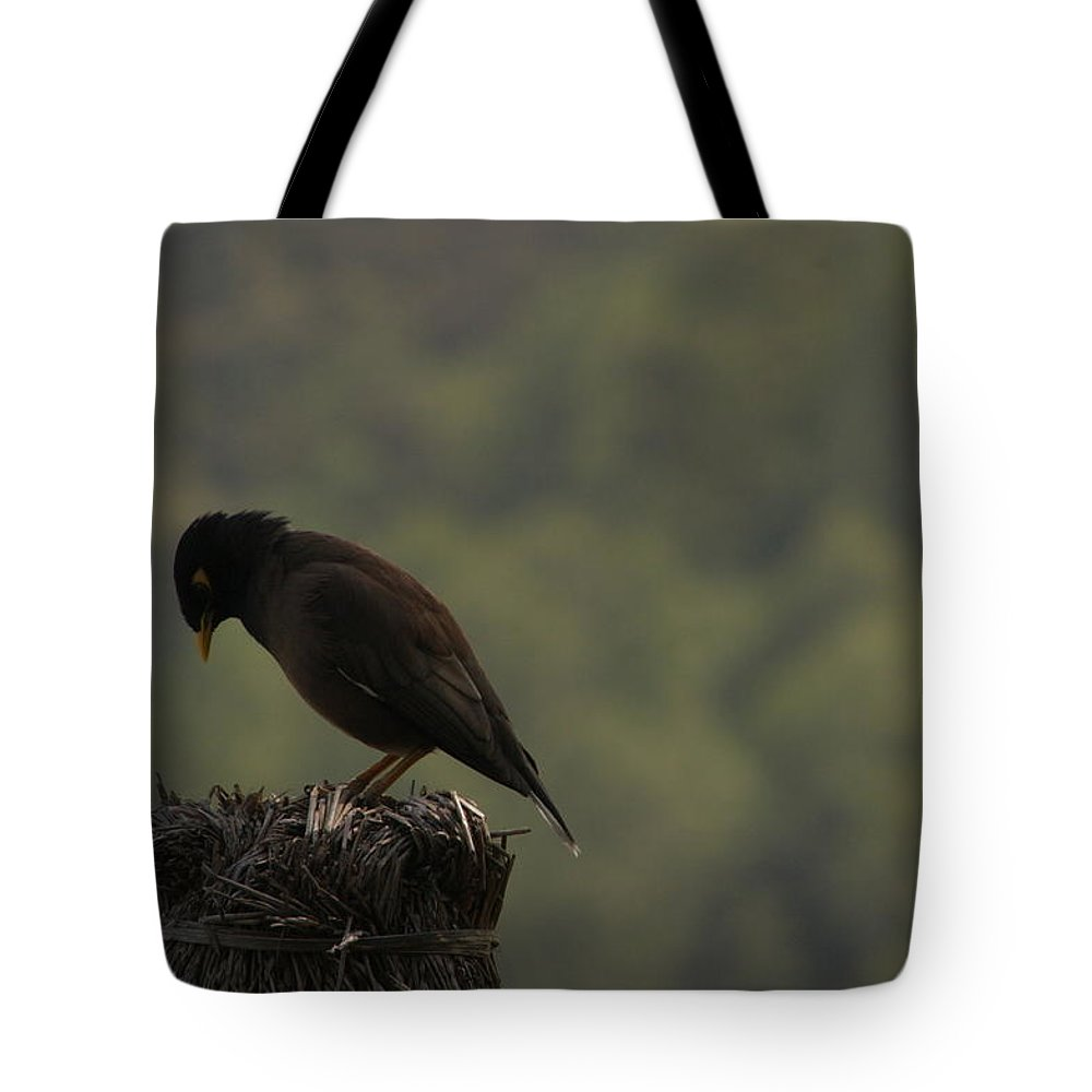 Raven Tote Bag featuring the photograph Nepalese Raven Bird by Dagmar Batyahav