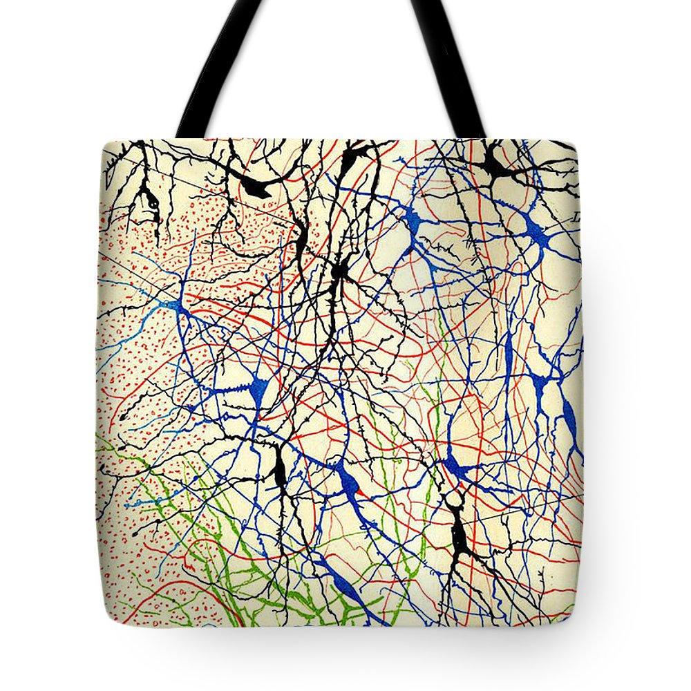 History Tote Bag featuring the photograph Nerve Cells Santiago Ramon Y Cajal by Science Source