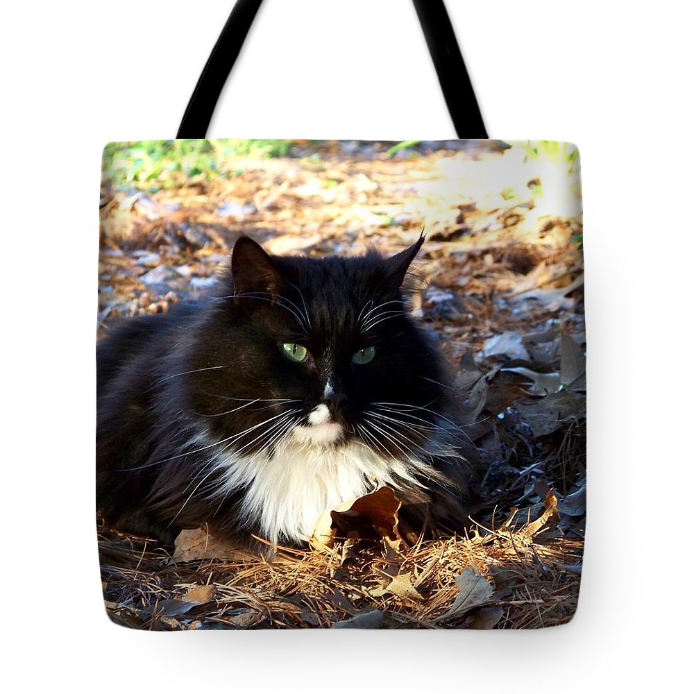 Cat Tote Bag featuring the photograph Nesting by Jai Johnson