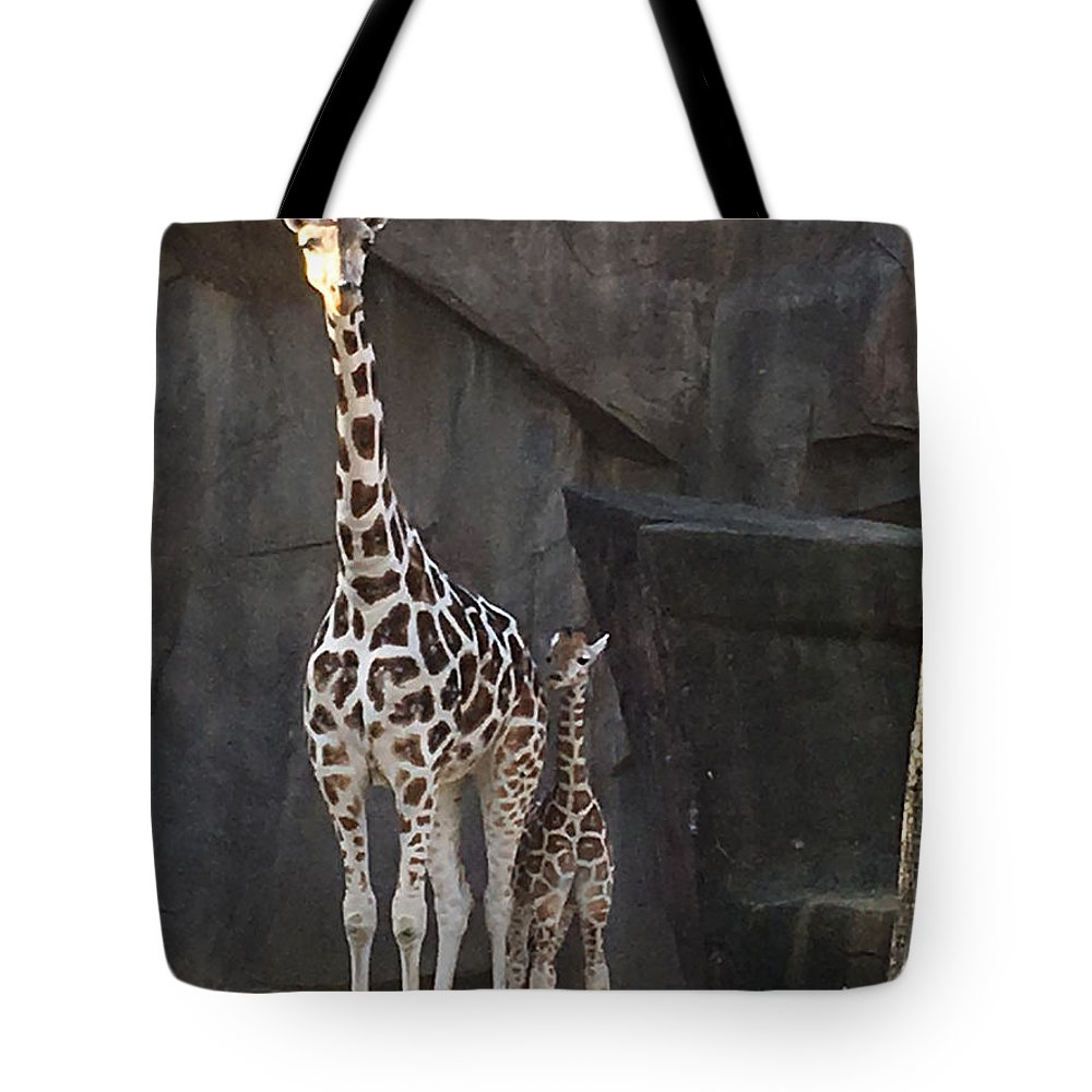 Zoo Tote Bag featuring the photograph New Baby Giraffe by Jean Wolfrum