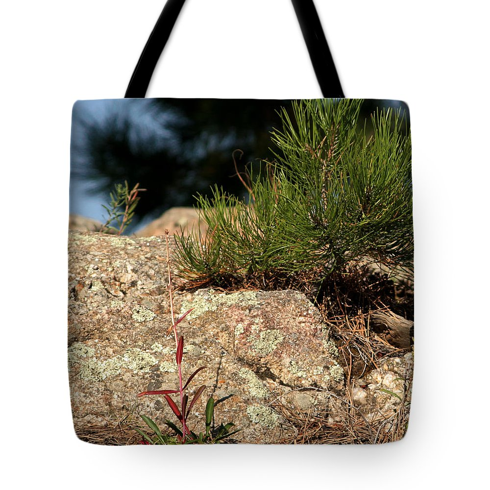 Attraction Tote Bag featuring the photograph New Growth by Mike Oistad