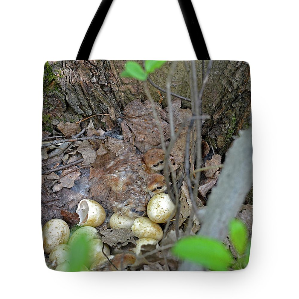 Ruffed Grouse Tote Bag featuring the photograph Newly Hatched Ruffed Grouse Chicks by Asbed Iskedjian