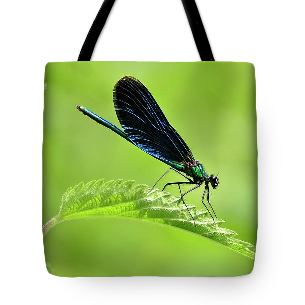 Beautiful Demoiselle Tote Bag featuring the photograph Beautiful Demoiselle Damselfly by Phil Robinson