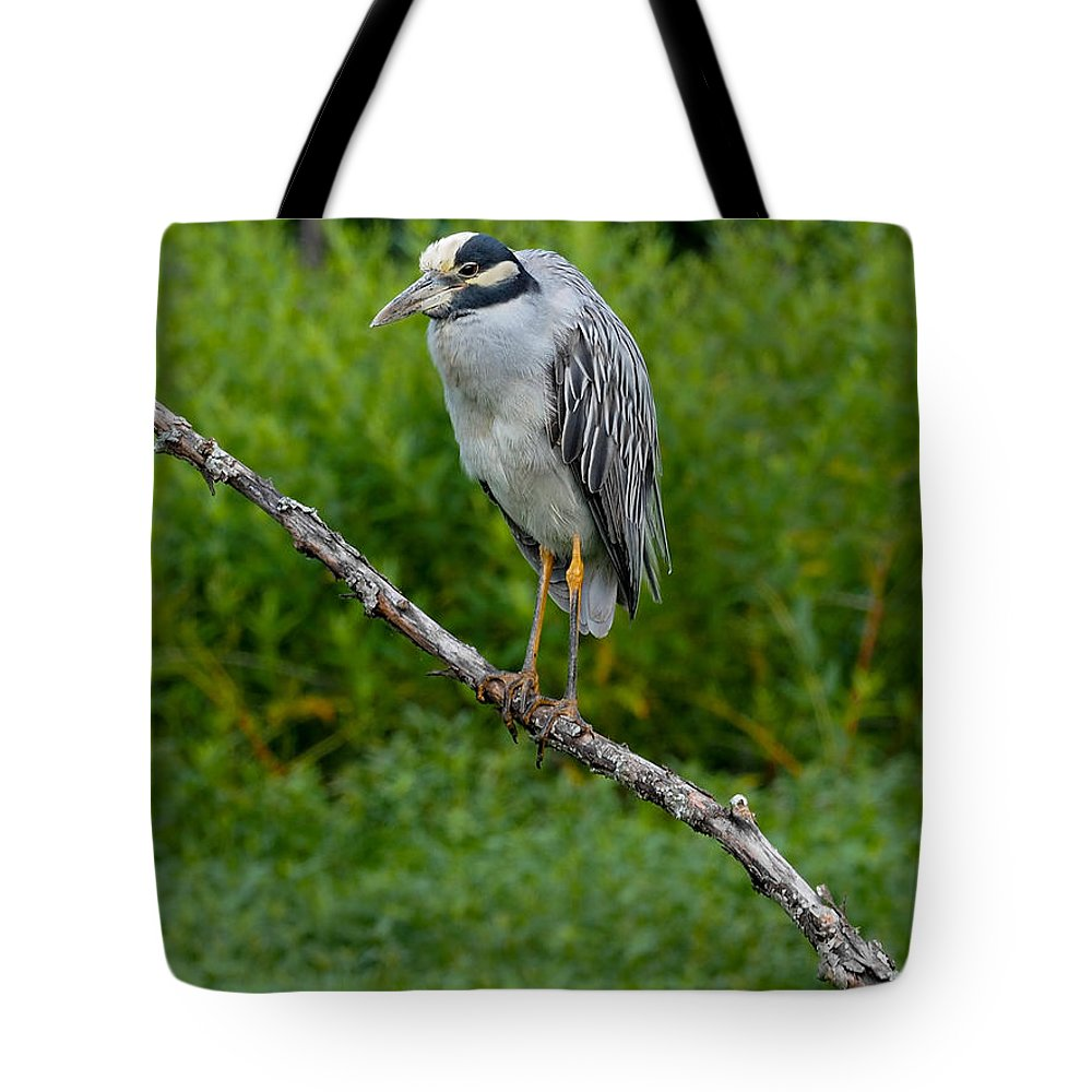 Heron Tote Bag featuring the photograph Night Heron On Slim Branch by Paula Ponath