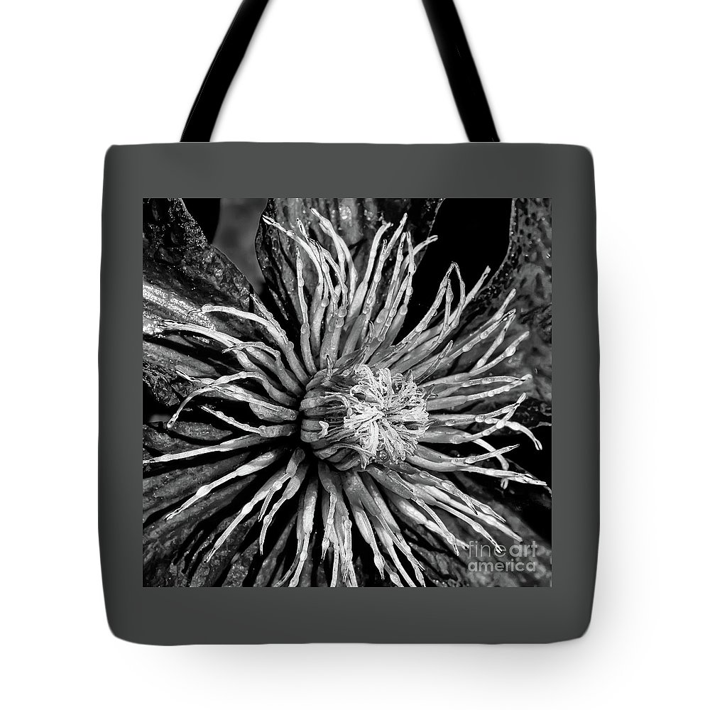 Nik Silver Fine Art Process Tote Bag featuring the photograph Niobe Clematis Study In Black And White by Jennifer Mitchell