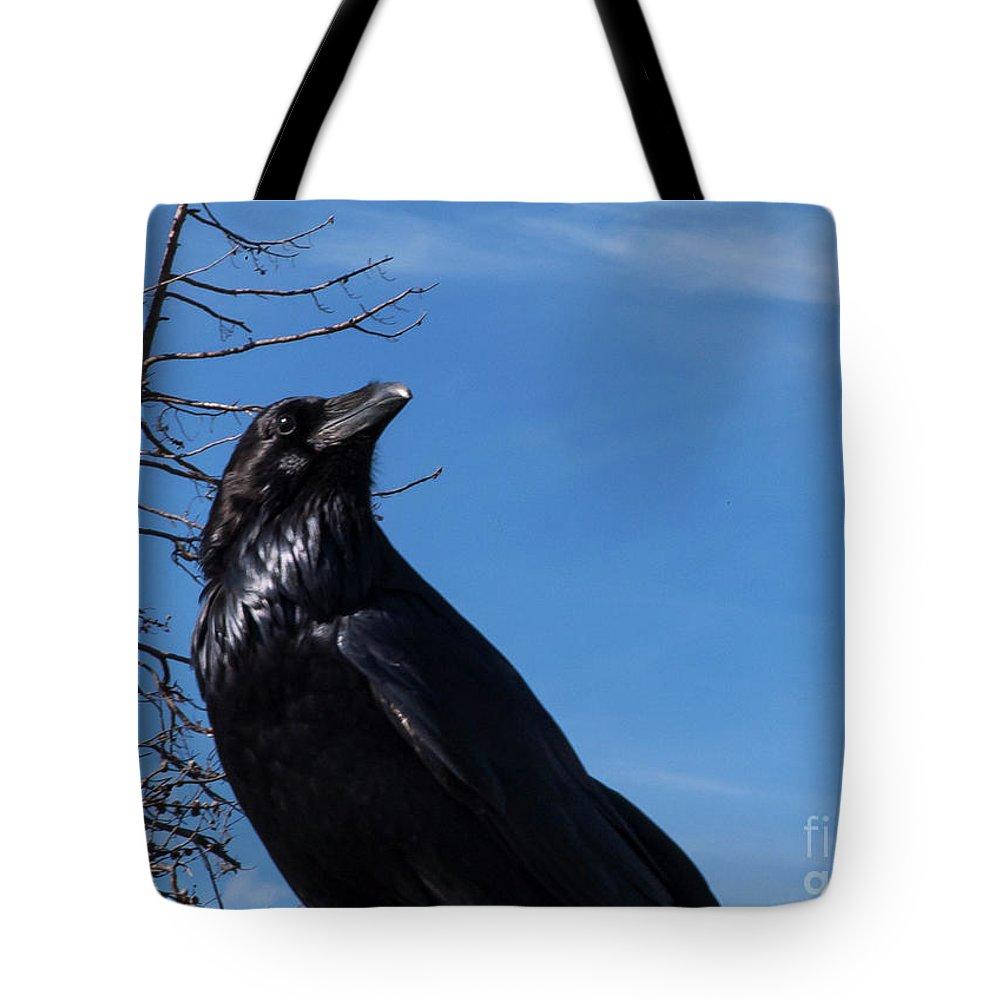 Yellowstone National Park Tote Bag featuring the photograph Noise Alert by Bob Phillips