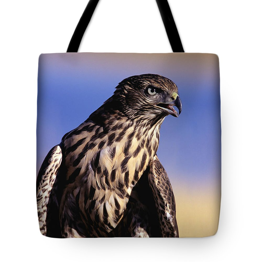 Accipiter Tote Bag featuring the photograph Northern Goshawk by John Hyde - Printscapes