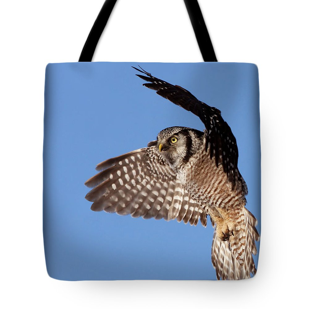 Animal Tote Bag featuring the photograph Northern Hawk Owl by Mircea Costina Photography