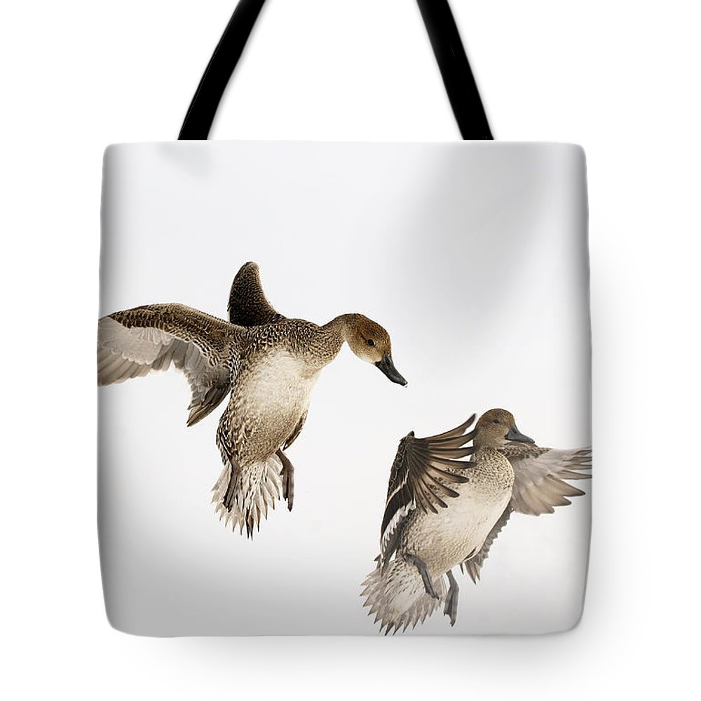 Fn Tote Bag featuring the photograph Northern Pintail Anas Acuta Duck by Wim Weenink