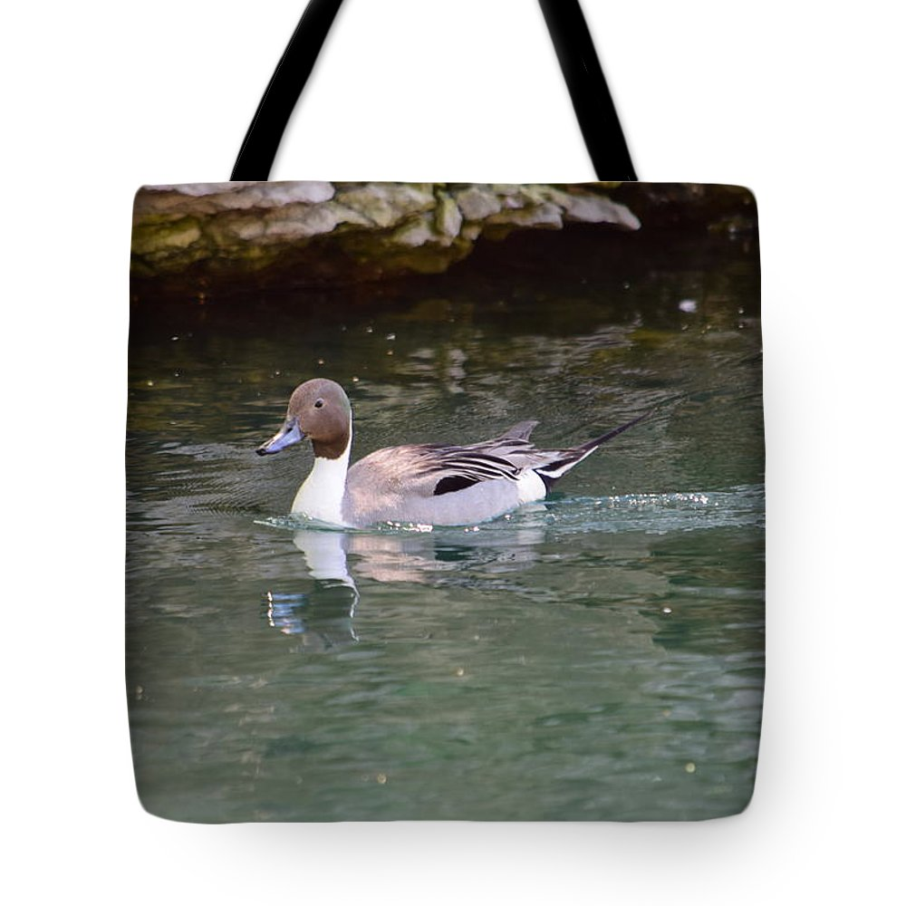 Bird Tote Bag featuring the photograph Northern Pintail by Floyd Kauffman