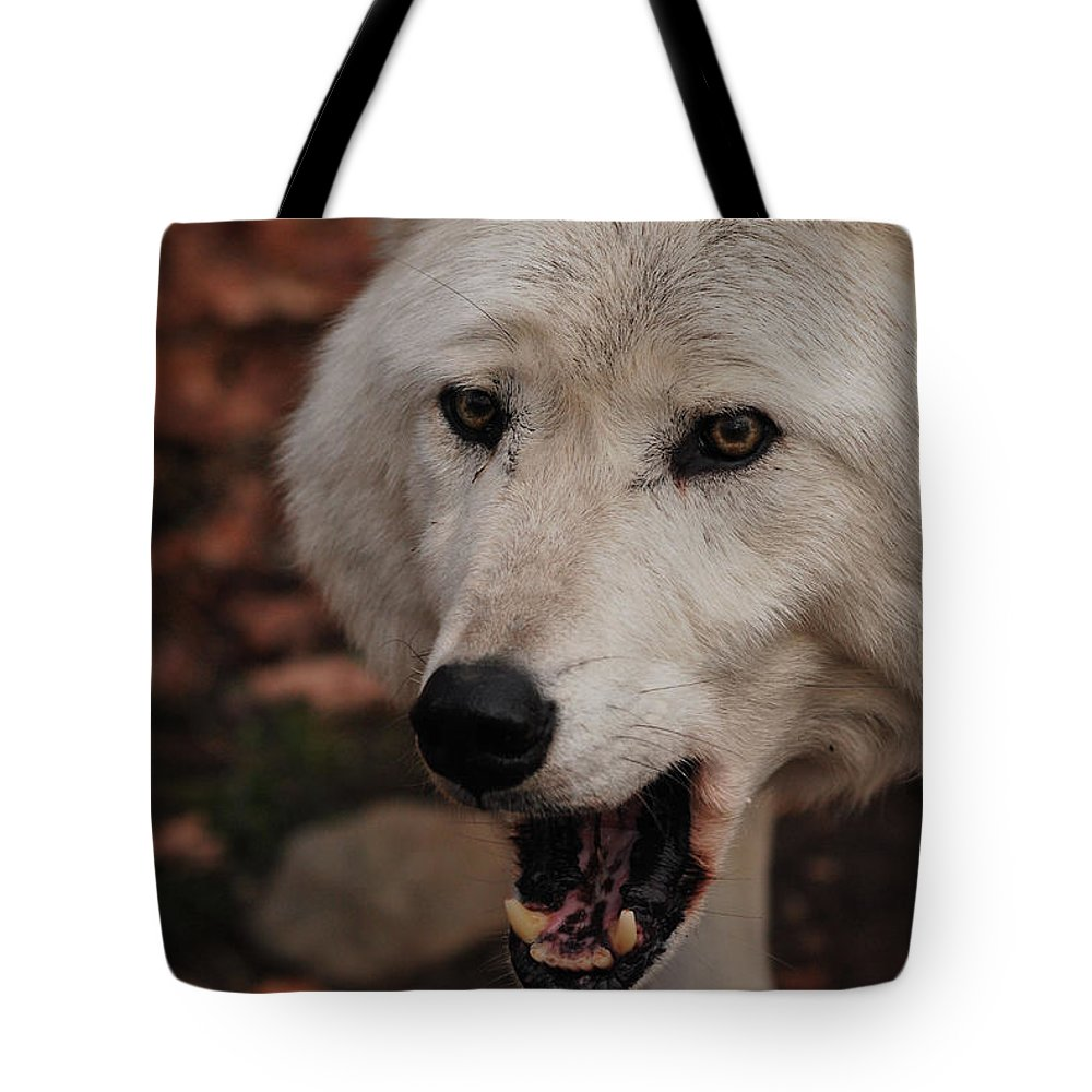 Wolf Tote Bag featuring the photograph Not A Happy Face by Lori Tambakis