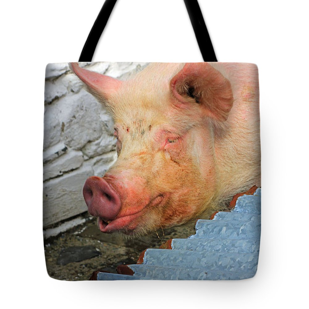 Not A Piglet Anymore Tote Bag featuring the photograph Not A Piglet Anymore by Jennifer Robin