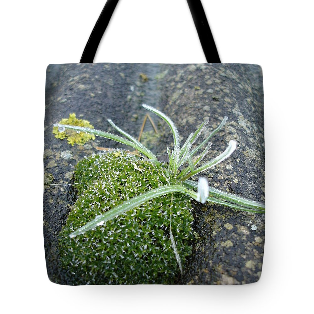 Green Tote Bag featuring the photograph Not Quite A Roof Garden by Susan Baker