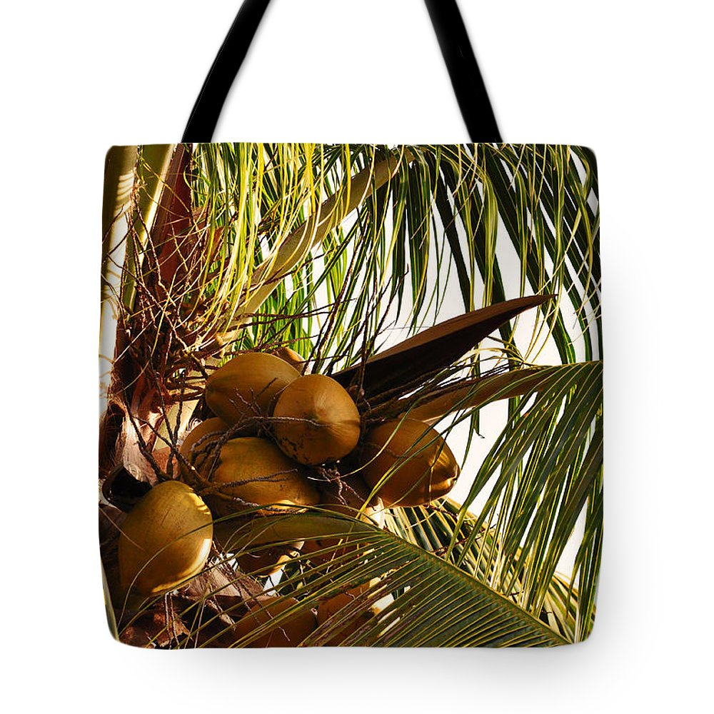 Key West Florida Tote Bag featuring the photograph Nuts On Tree by Davids Digits