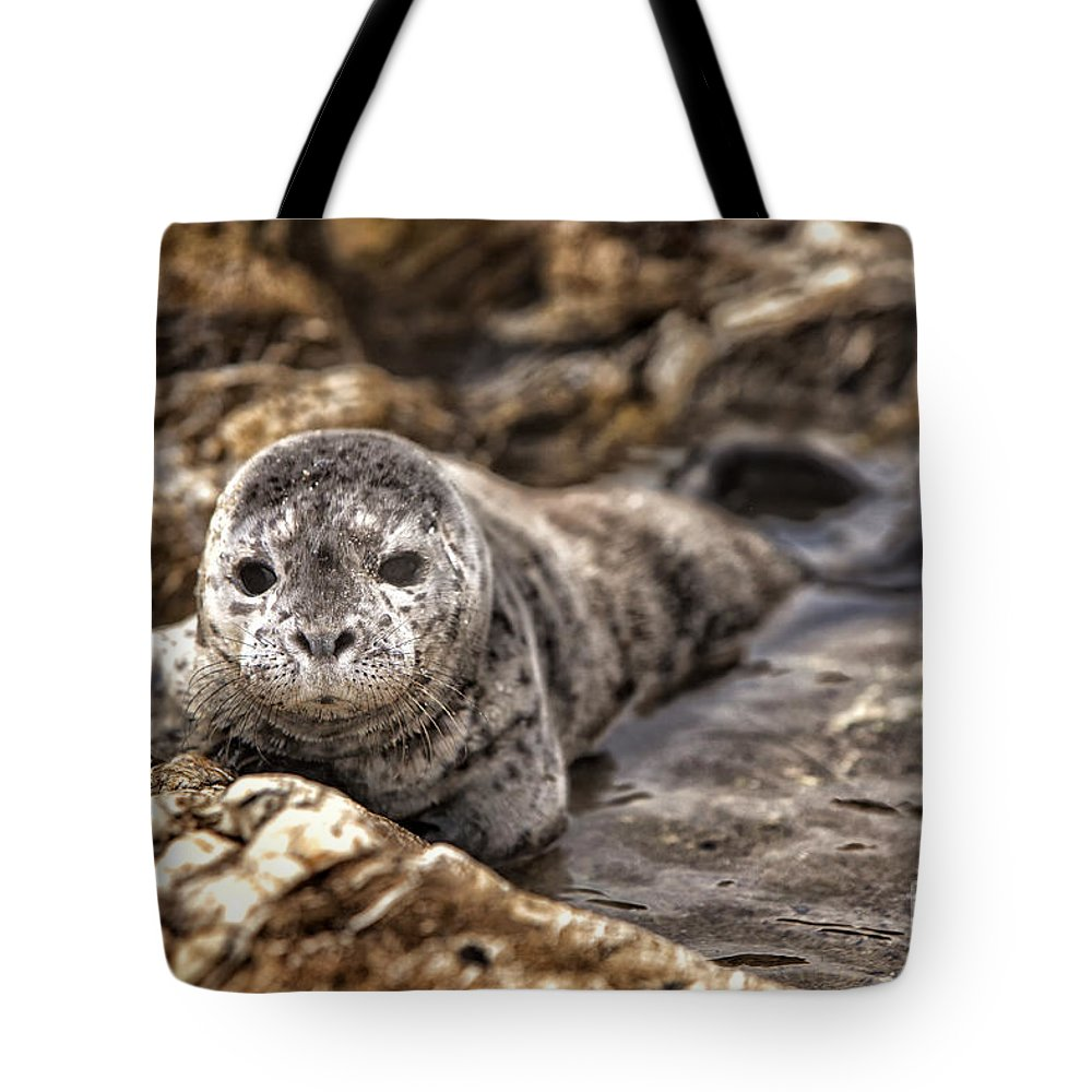 Ocean Life Renewed Tote Bag featuring the photograph Ocean Life Renewed by David Millenheft